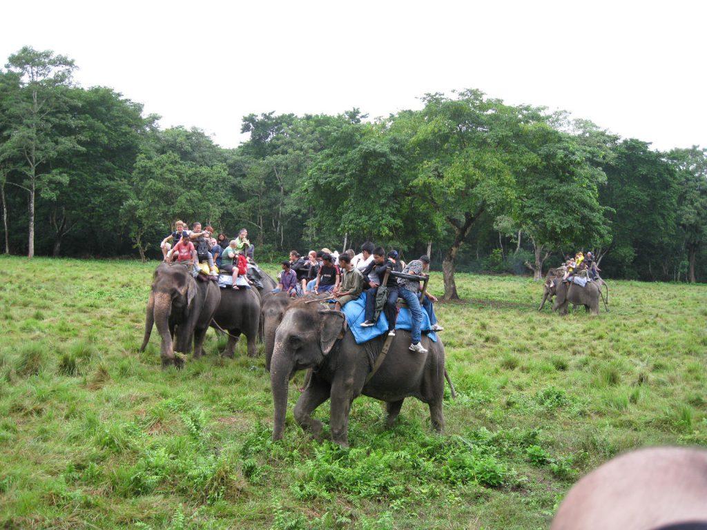 Jungle Safari Tour