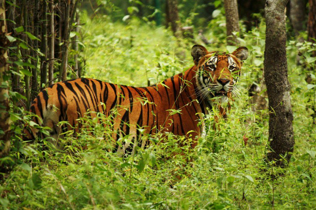 Chitwan_nation_Park-Ace_vision_Nepal